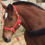 Sophrologie et équitation