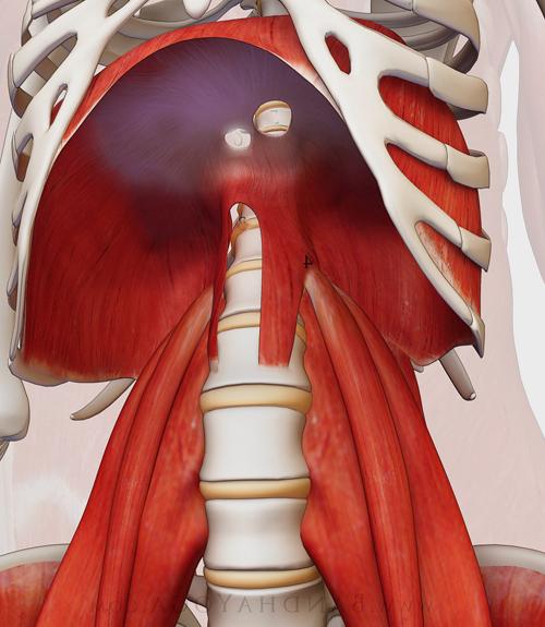 psoas diaphragme respiration sophro